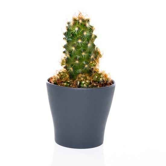 Poliwork 8,5 Gardenya Bitki ve Kaktüs Saksısı No:2 300 ml | ID1359