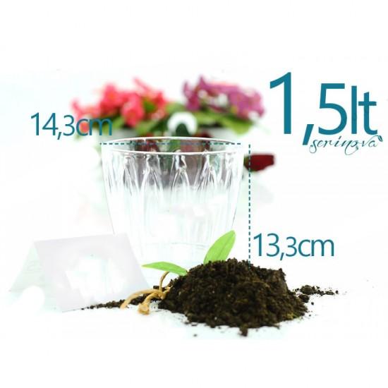 Serinova OR02 Orkide Şeffaf Saksı 1.5 Litre | ID0177